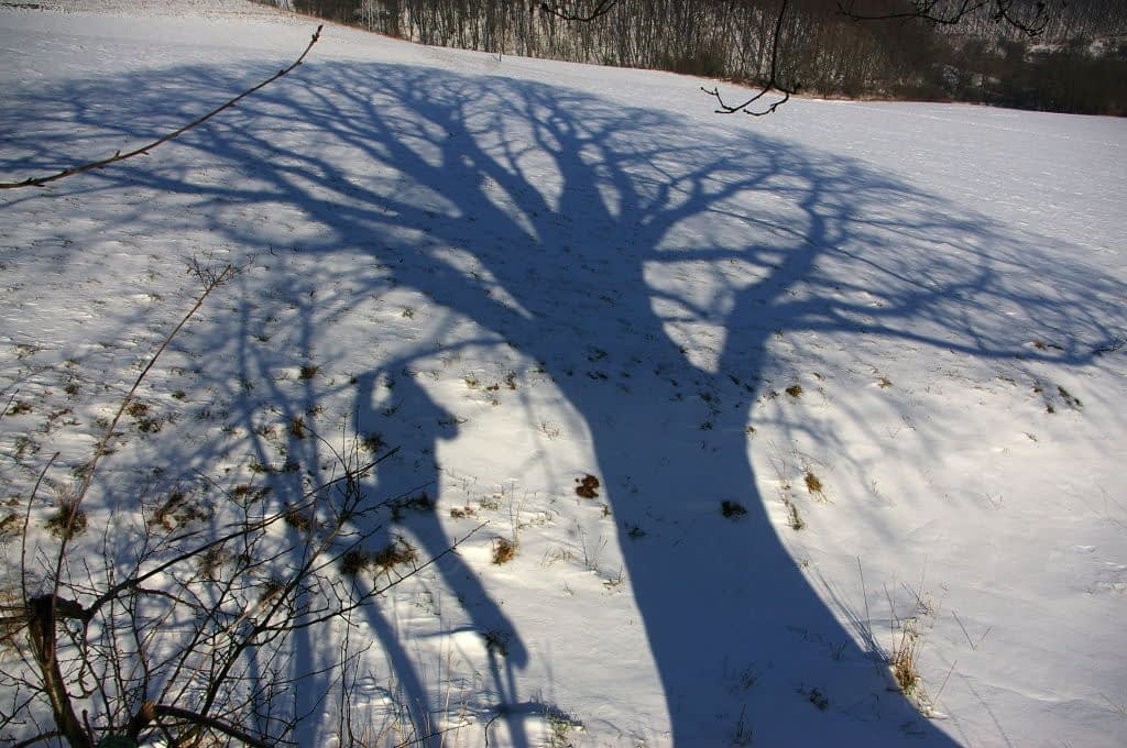 Cień wielkiego drzewa