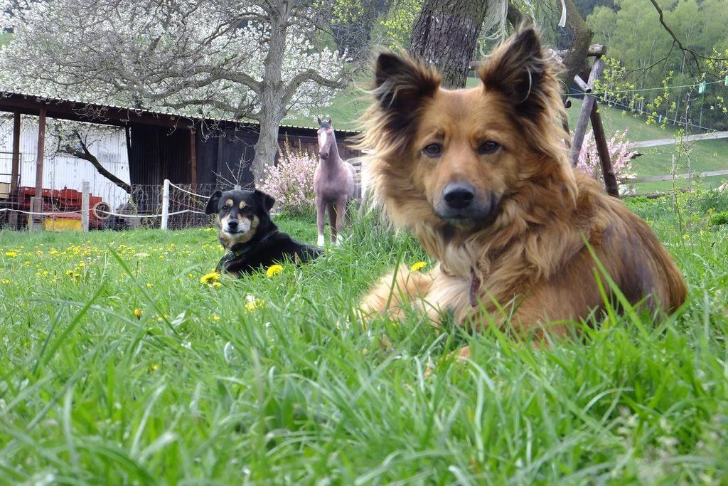 Psy i koń sztuczny