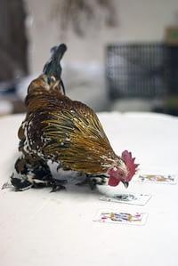 Najpierw wytresuj kurczaka