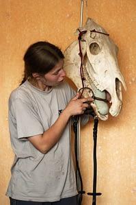 Koń naturalny