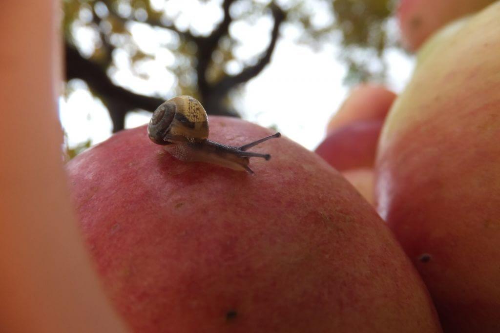 Świat jabłek