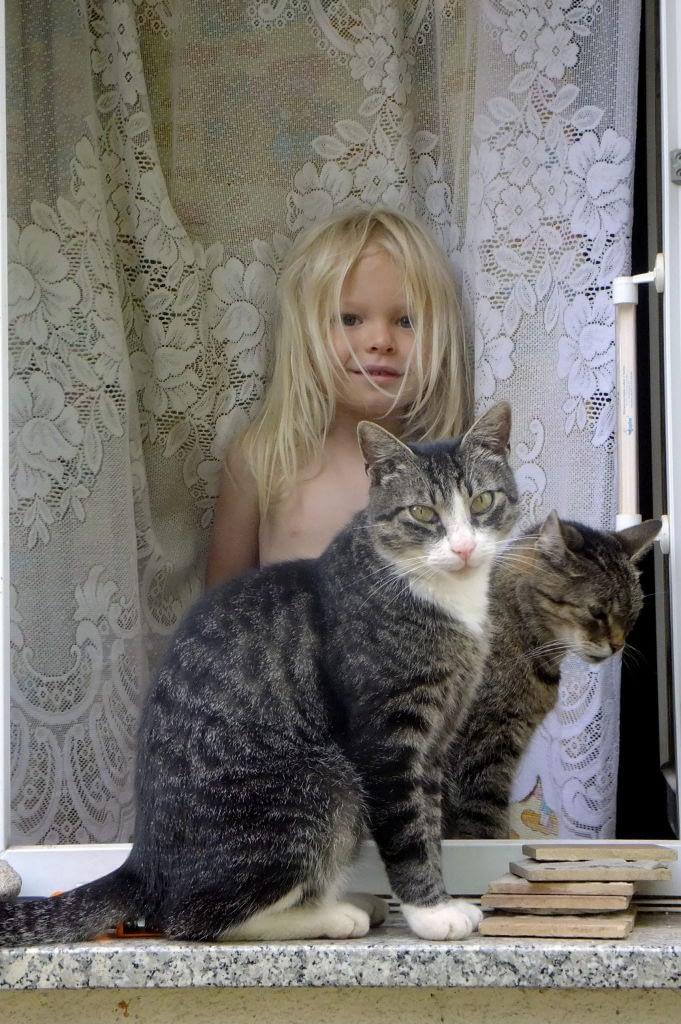 Maciek i koty